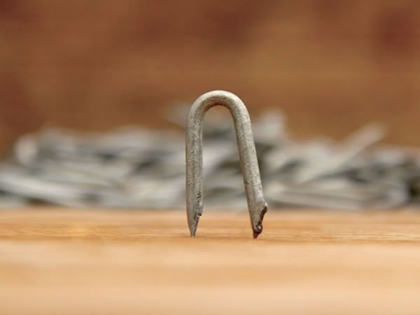 Galvanized U Nails - DingZhou KinTai Metals Co.,Ltd